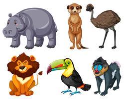Diversi tipi di animali selvatici impostati