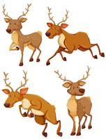 Cervo carino in quattro diversi posti