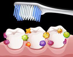Batteri tra i denti durante la spazzolatura vettore