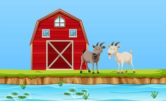 Due capre nella scena dell'azienda agricola vettore