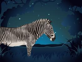 Zebra nella foresta di notte vettore