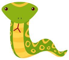 Serpente verde su sfondo bianco
