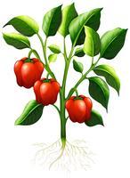 Peperone rosso sul ramo vettore
