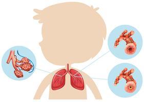 Anatomia di un polmone del ragazzo vettore