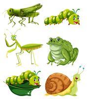 Diversi tipi di insetti in colore verde vettore