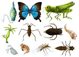 Diversi tipi di insetti su sfondo bianco vettore