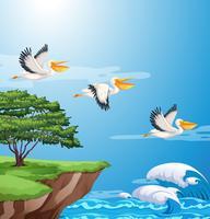 Volo del pellicano sul cielo vettore