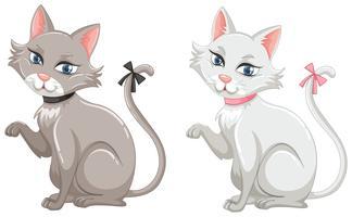 Gatti con pelliccia grigia e bianca