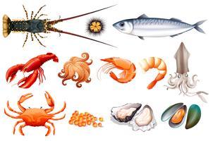 Set di pesce fresco