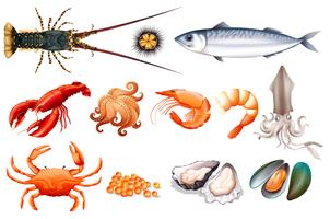 Set di pesce fresco vettore