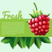 Rasberry fresco con testo vettore