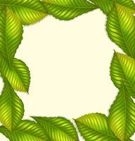 Design del telaio con foglie verdi vettore