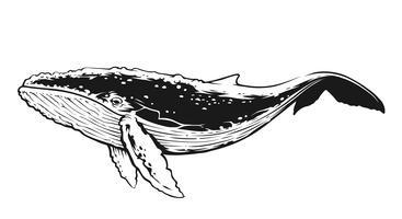 Arte vettoriale di contrasto bianco e nero di balena