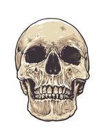 Cranio anatomico grunge