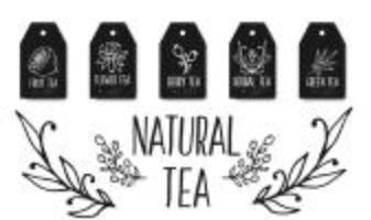 Collezione di etichette di tè alle erbe. Erbe biologiche e fiori selvatici. Illustrazione delle bacche di frutti schizzata mano. vettore
