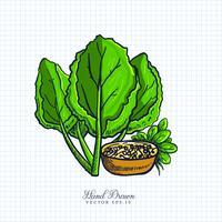 Illustrazione disegnata a mano di frutta e verdura