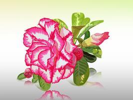 Impala giglio, rosa del deserto, finta azalea, pinkbignonia, fiore adenium vettore