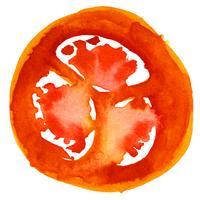 pomodoro. acquerello