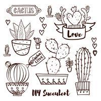 Cactus e succulente in vaso.