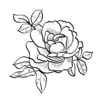 schizzo a matita della rosa vettore