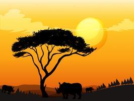 Scena della siluetta con il rinoceronte nel campo vettore