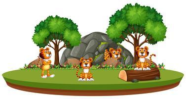 Tigre nella natura isolata