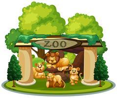 Una famiglia di leoni nello zoo vettore