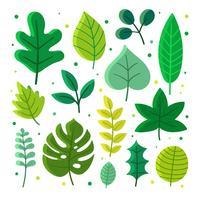 Le foglie verdi hanno messo il vettore