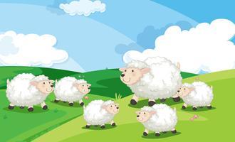 Un gruppo di pecore in campo vettore