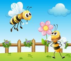 Due api dentro la staccionata di legno