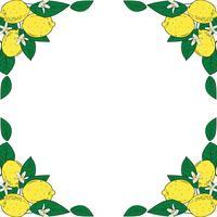 Frutti tropicali di agrumi limone con cornice di fiori. Estate sfondo colorato Illustrazione vettoriale