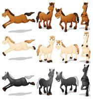 Set di cavalli vettore
