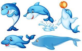 Delfini giocosi