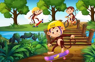 Scimmia e sport estremo nel parco vettore