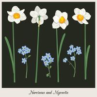 Narciso e miosotis. Imposta raccolta. Illustrazione botanica disegnata a mano su sfondo scuro. Illustrazione vettoriale