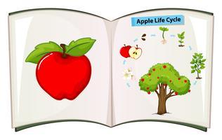 Libro del ciclo di vita delle mele vettore