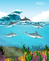 Delfini che nuotano sotto il mare vettore