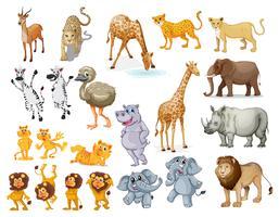 Insieme della fauna selvatica