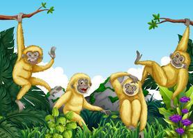 Scimmia nella giungla vettore