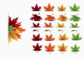 Pacchetto di foglie d'acero vettoriale