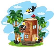 Uccello del tucano alla casa di legno vettore