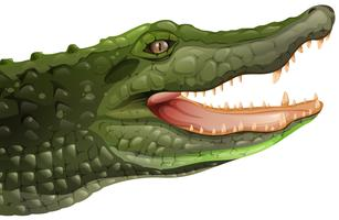 Un coccodrillo vettore