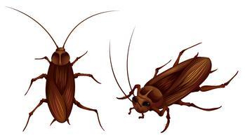 scarafaggi vettore