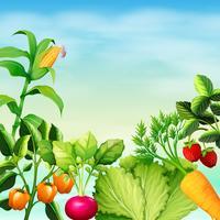 Molti tipi di verdure vettore