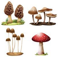 Funghi vettore