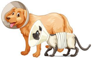 Cane e gatto con colletti