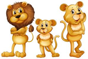 Famiglia di leone in piedi insieme vettore