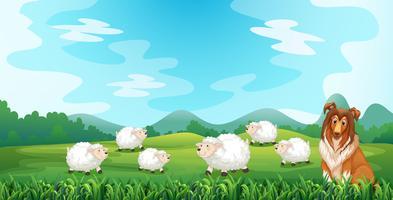 Pecore e cane vettore