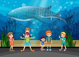 Bambini e orca in acquario