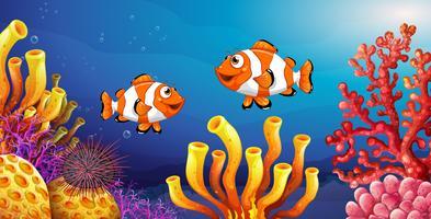 Scena subacquea con pesci pagliaccio e ricci di mare